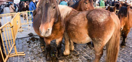 Imagen El Ayuntamiento de Estella-Lizarra acuerda la suspensión de las Ferias de San Andrés