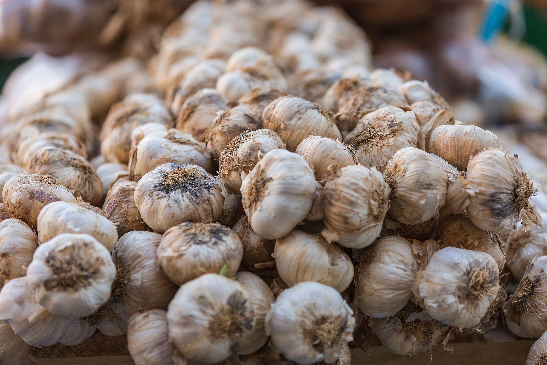 Mercado de los Jueves en Estella-Lizarra 4