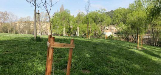 Imagen Udalak Trantsizio Ekologikorako Ministerioak emandako 35 zumarretatik 16 Hilobi Santuaren zelaian landatu ditu